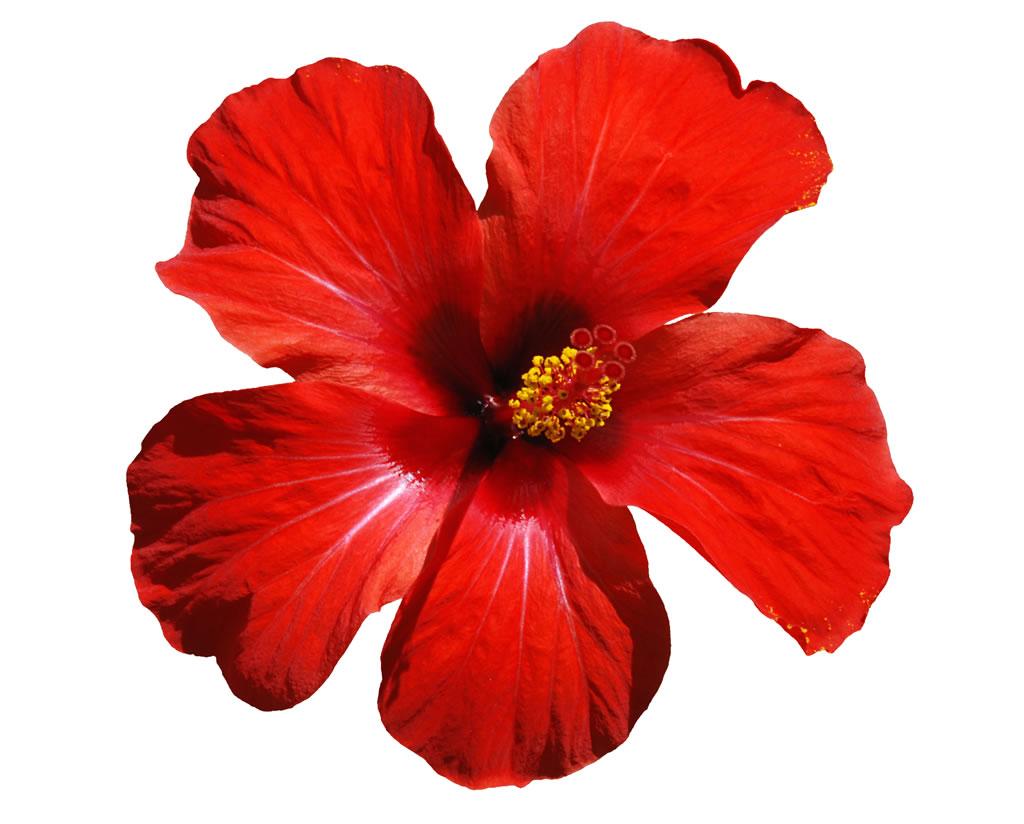 OahuRE - Hawaii Flowers